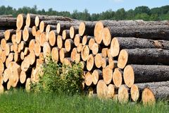 Tree trunks felled by the logging timber industry. Tree trunks felled by the logging timber industry on a sunny summer day royalty free stock image
