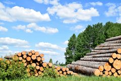 Tree trunks felled by the logging timber industry. Tree trunks felled by the logging timber industry on a sunny summer day royalty free stock photography