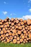 Tree trunks felled by the logging timber industry. Tree trunks felled by the logging timber industry on a sunny summer day stock photos