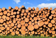 Tree trunks felled by the logging timber industry. Tree trunks felled by the logging timber industry on a sunny summer day stock image