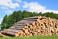 Tree trunks felled by the logging timber industry. Tree trunks felled by the logging timber industry on a sunny summer day stock photography