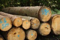 Tree trunks stock image