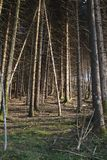 Tree trunks on a forest Royalty Free Stock Photo