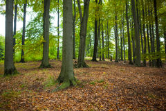 Tree trunks in the forest Stock Image