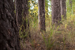 Tree Trunks in a Forest Stock Images