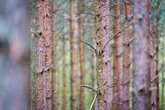 Tree trunks in forest Stock Images
