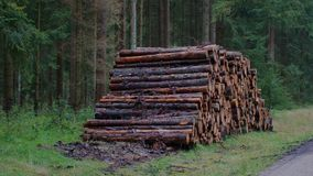 Tree trunks - forestry - deforestation Royalty Free Stock Photo