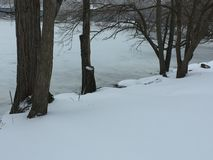 Tree trunks by the frozen shore. Trunks rising from snow next to the frozen river shore Stock Photos