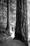 Tree trunks Stock Photos