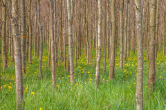 Tree trunks in greenery Stock Photography