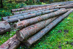 Tree trunks Royalty Free Stock Photos