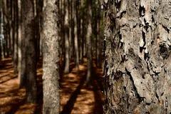 Tree Trunks Royalty Free Stock Photography