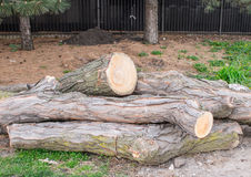 Tree Trunks Stock Photography