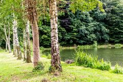 Tree trunks in line next to a lake with lush greenery background. Wonderful and sunny day in south Limburg in the Netherlands Holland royalty free stock photo