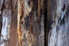 Tree Trunks Royalty Free Stock Image
