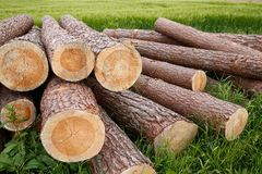 Tree trunks lying in a countryside Stock Images