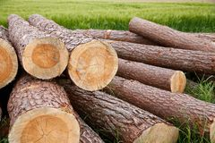 Tree trunks lying in a field Stock Photography