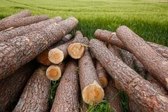 Tree trunks lying on a green field Stock Photography