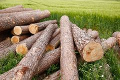 Tree trunks lying in a green field,waiting for tra Royalty Free Stock Photography