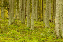 Tree trunks and moss Stock Images