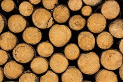 Tree trunks. Natural texture. Czech Republic stock photography