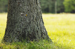 Tree trunks in nature Royalty Free Stock Image