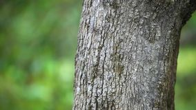 Tree trunks in nature blurred background. HD. stock footage