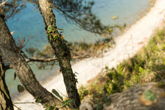 Tree trunks over see Royalty Free Stock Photography