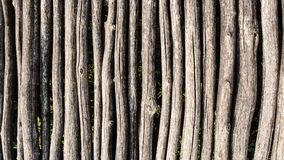 Tree trunks palisade background stock images