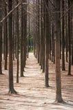 Tree trunks in park Stock Image