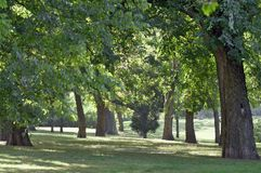 Tree trunks in the park Royalty Free Stock Photo