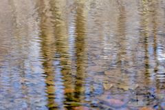Tree trunks reflecting in a calm clear forest creek with plentyful foliage underwater, on a beautiful autumn day stock image