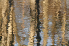 Tree Trunks Reflecting in River Stock Image