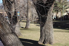 Tree Trunks by the River. Tree trunk by by the river in Santa Fe, New Mexico Royalty Free Stock Images