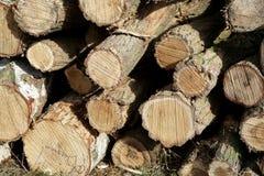 Tree trunks Royalty Free Stock Photos