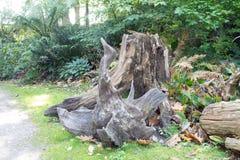 Tree trunks Stock Photo