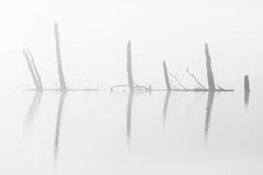 Tree trunks silhouette in mist Royalty Free Stock Photos
