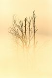 Tree trunks silhouette in sunrise Stock Image