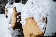 Tree trunks. In the snow Royalty Free Stock Image