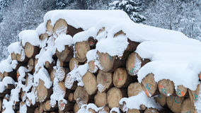 Tree trunks and snow Stock Images