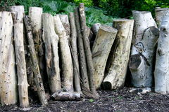 Tree trunks Royalty Free Stock Photography