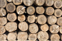 Tree trunks stacked stock photography