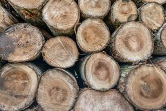 Tree trunks stacked close together. Full-screen close-up image of stacked tree trunks with clearly visible annual rings. The photo was taken in a Dutch forest at royalty free stock photos