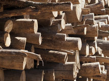 Tree trunks stacked, close up Royalty Free Stock Image