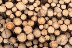 Tree trunks stacked. Close-up Royalty Free Stock Image