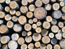 Tree trunks stacked like in a mosaic Stock Images
