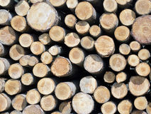 Tree trunks stacked like in a mosaic Royalty Free Stock Photography
