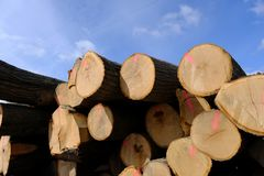 Tree trunks stacked for transport after logging. Royalty Free Stock Photos