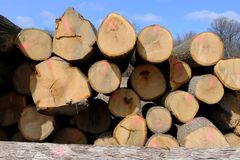 Tree trunks stacked for transport after logging. Stock Photos