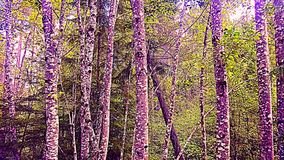 Tree trunks. Trees in a path stock photography